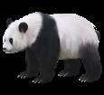 Panda - pelaje 65