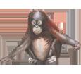 Orangután  - pelaje 41