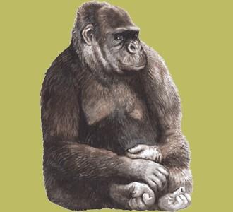 Acoger a un animal de la jungla de especie gorila