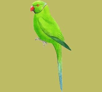 Acoger a un animal de la jungla de especie loro verde