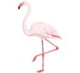 Flamenco rosa - pelaje 68