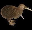 Kiwi - pelaje 52
