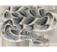 Víbora cascabel  - pelaje 52