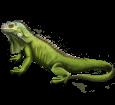 Iguana - pelaje 72