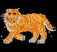 Tigre - pelaje 1340000004