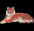 Tigre - pelaje 1340000005