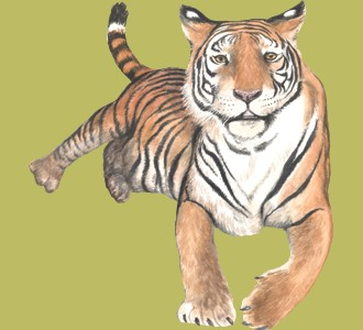 Acoger a un animal de la jungla de especie tigre
