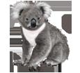 Koala - pelaje 52
