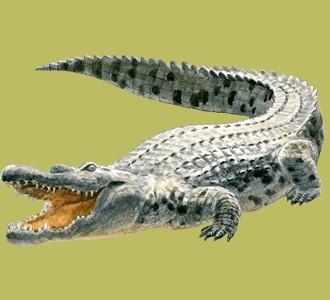 Acoger a un animal de la jungla de especie cocodrilo